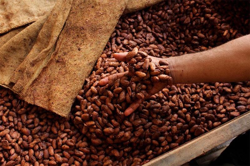 فواید کاکائو برای مو